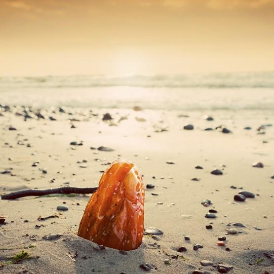 Bursztyn na plaży